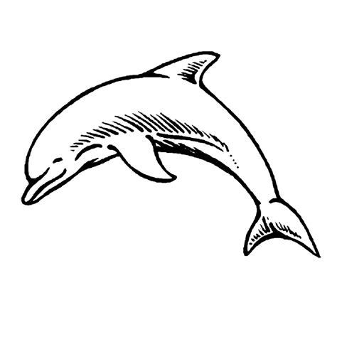 Dolfijnen In De Zee Kleurplaat by Leuk Voor Dolfijnen 0002