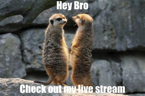 Mere Cat Meme - related keywords suggestions for meerkat meme