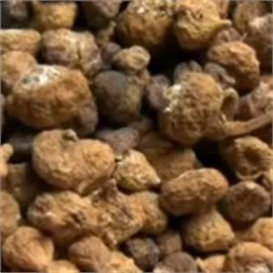 Tröpfchenbewässerung Selber Bauen : maca superfood powerknolle lustmacher garten pflanzen ~ Lizthompson.info Haus und Dekorationen