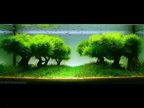Aquascape World by Best World Aquascape Underwater Landscapes Awesome