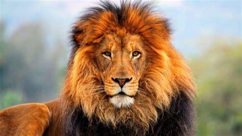 Big 5 Animals of Africa