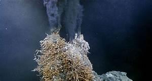 hydrothermal vent on Tumblr