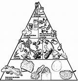 Pyramid Coloring Pages Healthy Nutrition Printable Groups Clipart Basic Colouring Foods Children Cooking Tips Coloringhome Sheets Lunchbox Teaching Eating Health sketch template