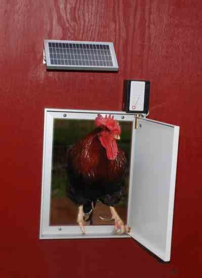 solar chicken door coop ret chapter chicken coop door opener timer