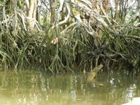 Animals That Live in Swamps and Wetland
