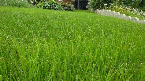 Wann Soll Rasen Vertikutieren by Wann Soll Den Rasen Vertikutieren Rasen Vertikutieren