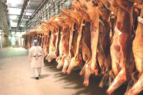 woolies  coles northern beef processing