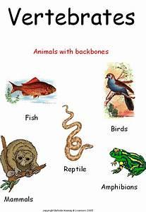 ANIMAL GROUPING 2: VERTEBRATES & INVERTEBRATES