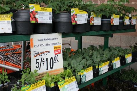 Sweet Deals At The Home Depot Plant And Garden Sale