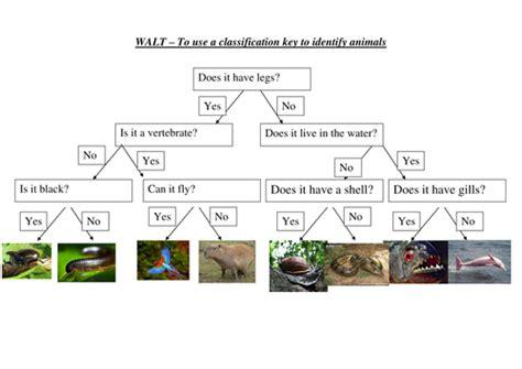 Rainforest Classification Keys Teaching Resources