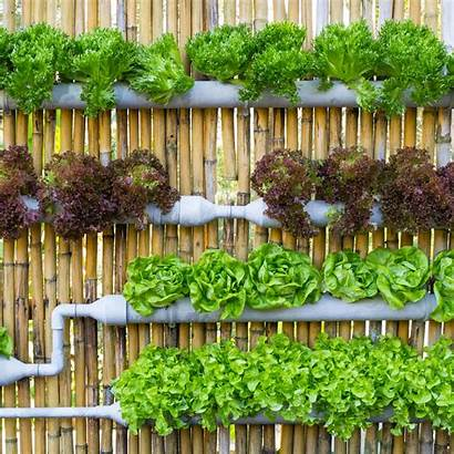 Hydroponic Garden Gardening Thespruce Einpflanzen Leichtgemacht Anbau