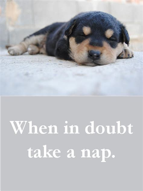 beautiful dog quotes  touching  poignant