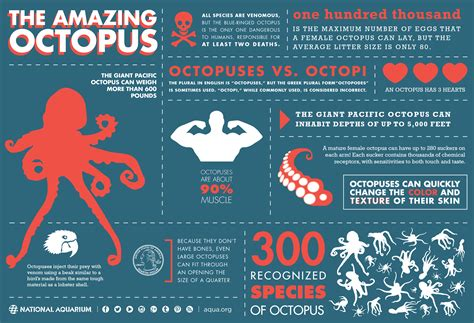 octopus a crab gifs