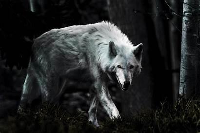Wolf Dark Wallpapers Wallpapertag Windows