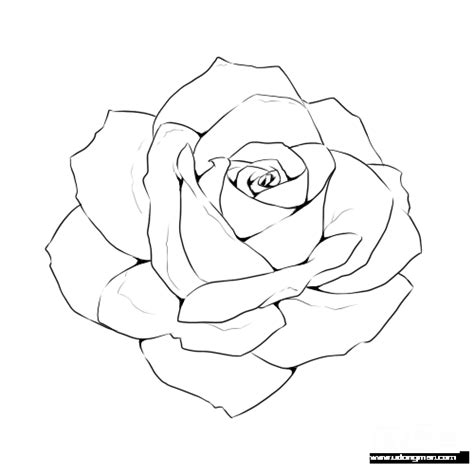 rose  drawing template flower drawing tutorials
