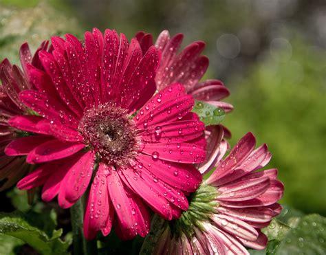 gambar air mekar embun menanam pagi ungu daun