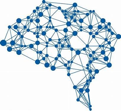 Deep Network Brain Learning Belief