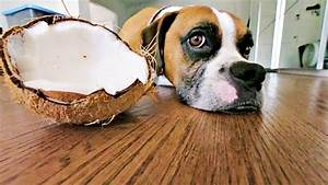 46 Toxic Foods For Dogs  Complete Guide