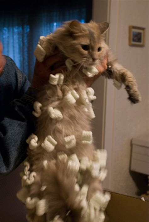 cats     static electricity  hard