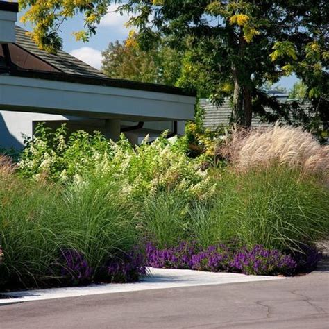 landscaping privacy ideas pinterest discover and save creative ideas