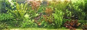 Pflanzen Für Aquarium : duengung ~ Buech-reservation.com Haus und Dekorationen