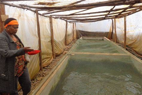 jane waruinge  proprietor  jasa fish farm  thika