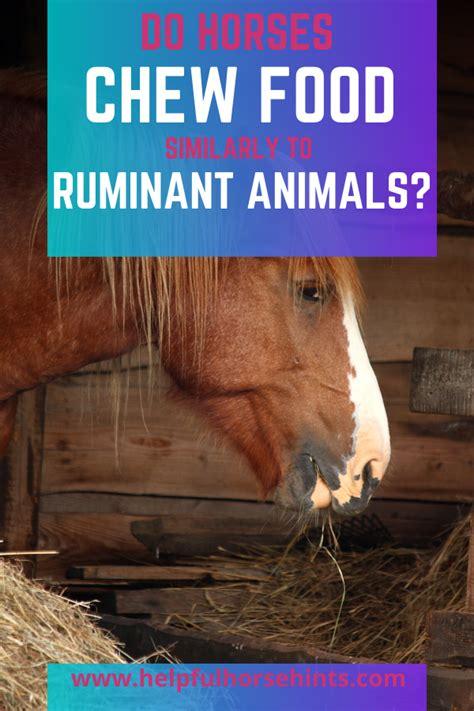 horses ruminant animals helpfulhorsehints