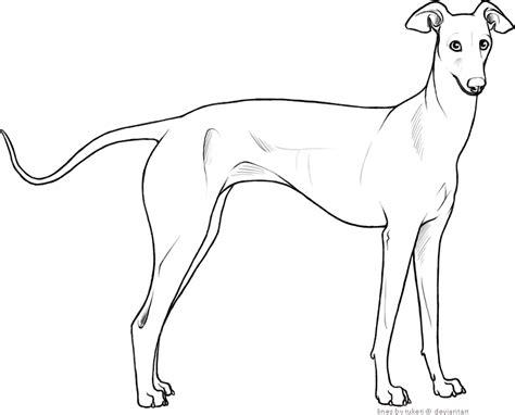 foto de Free Lines Italian Greyhound by tuketi on DeviantArt