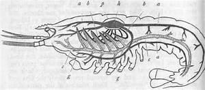 Crustacea  Part 3