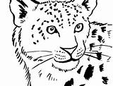 Leopard Coloring Snow Pages Colouring Seal Drawing Clip Amur Template Sheet Adults Popular Getdrawings Coloringhome Library Clipart Comments sketch template
