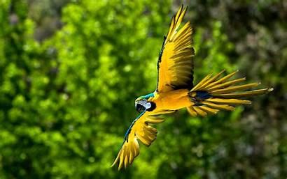 Macaw Wallpapers Bird Backgrounds Birds Parrot Desktop