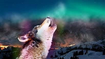 Howling Wolf Moon Wolves Desktop