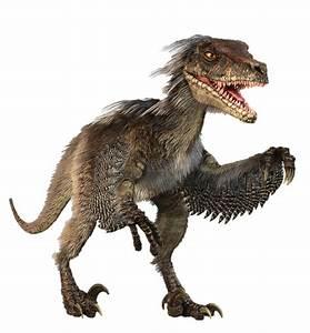 Learn about the Velociraptor, one of Jurassic World's main ...  Velociraptor