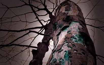 Dark Tree Trunk Strange Wallpapers Backgrounds Desktop