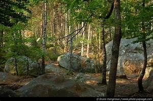 Forêt de Fontainebleau The Woodpecker