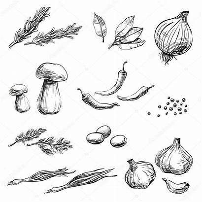 Spices Drawing Herbs Packaging Condiments Vegetables Background