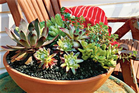 planting succulents in containers simply succulent 4262