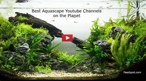 The Best Aquascape by Top 40 Aquascape Channels For Aquascaping Enthusiasts