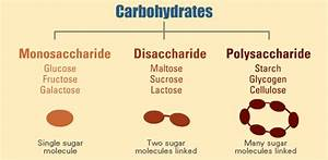 Carbohydrates: sources and importance
