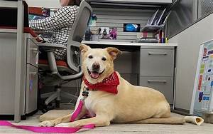 Office Dogs Donu2019t Drive Employee Engagement A Properly
