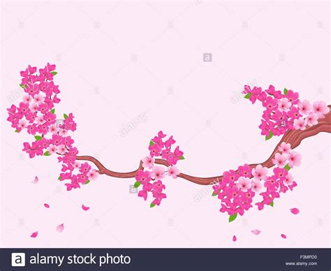 Blooming Sakura branch (Japanese cherry tree) on light