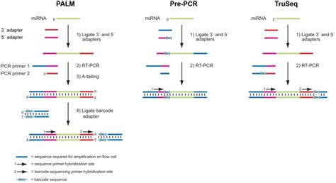 Illumina Sequencing Protocol by Illumina Truseq Protocol Pdf Pdf