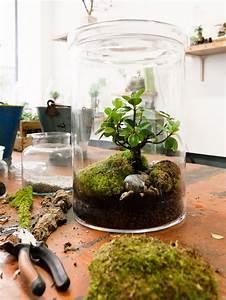 Terrarium Plante Deco : la maison plus verte avec des terrariums ma plante mon ~ Dode.kayakingforconservation.com Idées de Décoration