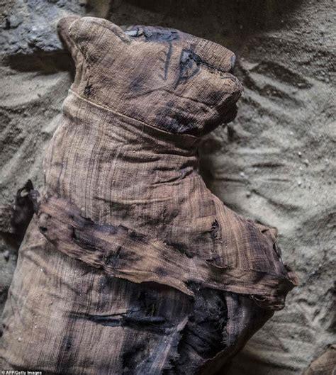 Zbulimi i madh në Egjipt, arkeologët gjejnë kafshë të ...
