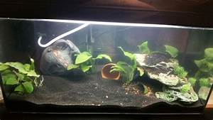 Aquarium Einrichten Anfänger : aquarium einrichtungsideen f r ~ Lizthompson.info Haus und Dekorationen
