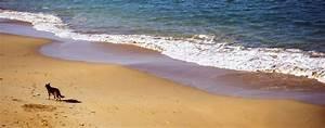 Urlaub Mit Hund Am Meer Italien : urlaub mit hund timmendorfer strand unterkunft mit ~ Kayakingforconservation.com Haus und Dekorationen