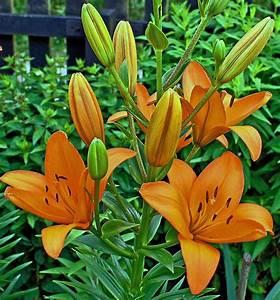 Fleur De Lys Plante : images gratuites la nature feuille t orange vert ~ Melissatoandfro.com Idées de Décoration