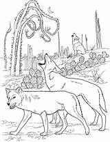 Wolf Coloring Pages Wolves Pack Animals Printable Sheets Adults Animal Howling sketch template
