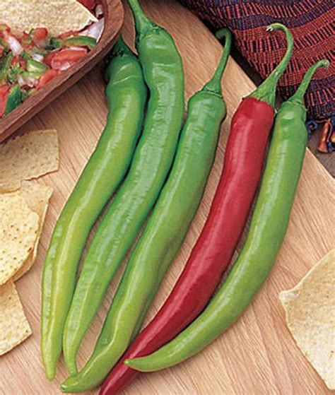 garden salsa pepper seeds picking peppers that taste just right the