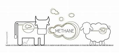 Ruminants Methane Production Cattle Gases Sheep Greenhouse